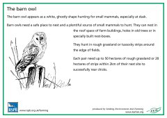 View details of 'RSPB Barn Owl'