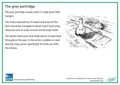 View details of 'RSPB Partridge'