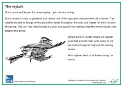 View details of 'RSPB Skylark'