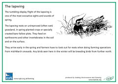 View details of 'RSPB Lapwing'