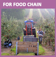 For Food Chain